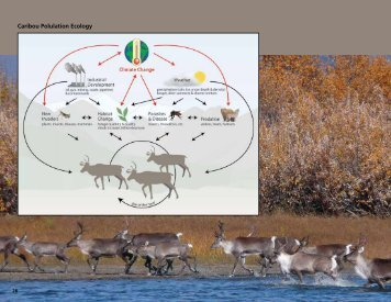 Complexity of Caribou Population Dynamics in a Changing Climate