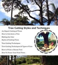Tree Cutting Styles and Techniques