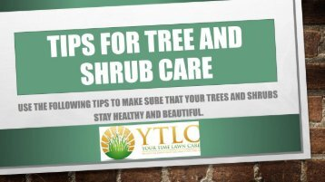 Tips for Tree and Shrub Care