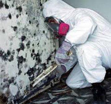 Mold Removal Miami Beach