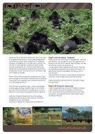 ExploreGoGoGorilla - Page 4