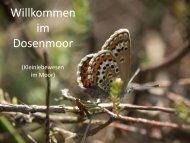 Kleinlebewesen-DM-080211