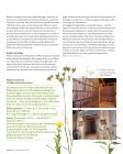 Wildnis Frühling/Sommer 2015 - Seite 7