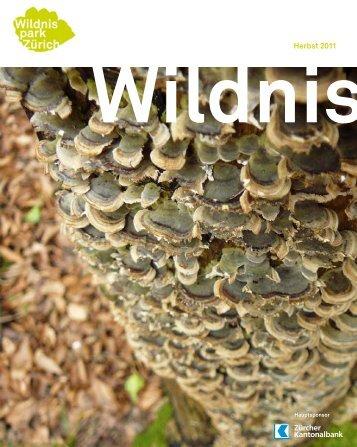 Wildnis Herbst 2011