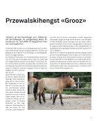 Wildnis Herbst 2011 - Seite 7