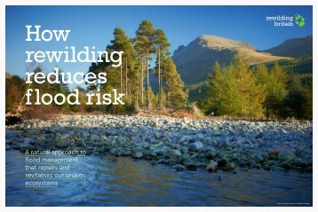How rewilding reduces flood risk