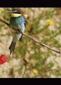 Valle del Jerte - Birding in Extremadura - Seite 4
