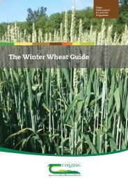 The Winter Wheat Guide