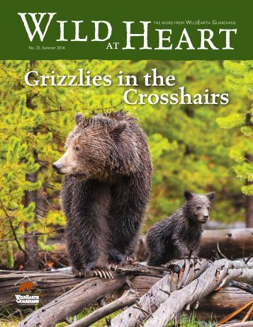 Grizzlies in the Crosshairs