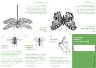 Insekten & Spinnen - Faltbuch
