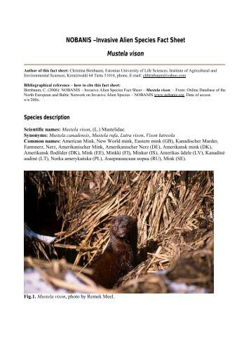 Invasive Alien Species Fact Sheet – Mustela vison - NOBANIS