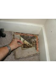 Mold Detection Miami Beach