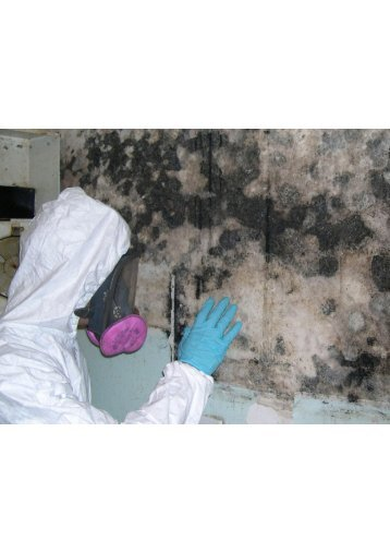 Miami Mold Inspection Companies