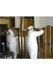 Miami Beach Mold Removal Companies