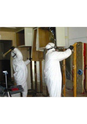 Miami Beach Mold Removal Companies