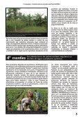 PALMA ACEITERA - Page 5