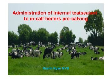 to in-calf heifers pre-calving