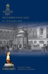 December Foal Sale 2016