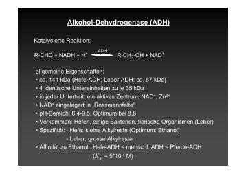 Alkohol-Dehydrogenase (ADH)