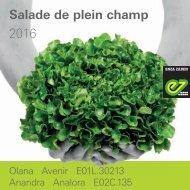 fr_salade de plein champ 2016