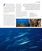 sw42_Ocean World - Seite 3