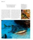 sw38_Fuerteventura - Seite 4