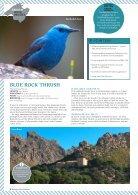Birding in Mallorca - Page 3