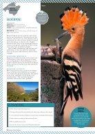 Birding in Mallorca - Page 5