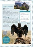 Birding in Mallorca - Page 6