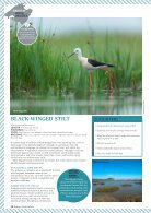 Birding in Mallorca - Page 7