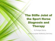 The stiffle joint of the Sport Horse - Diagnosis and Therapy