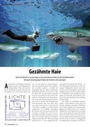 15.11.2011 Immobilienmakler im Ruhrgebiet