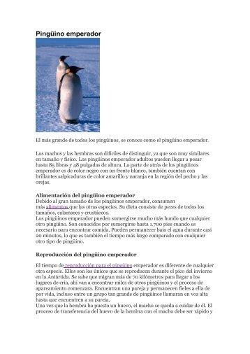Pinguinos Magazines