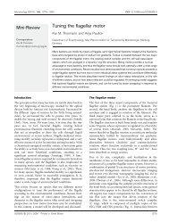 Tuning the flagellar motor - Microbiology