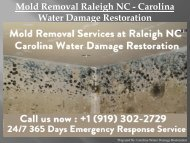Mold Removal Raleigh NC - Carolina Water Damage Restoration
