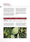 Gemüse Broschüre deutsch - K+S KALI GmbH - Seite 6