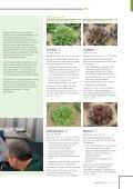 Fresh Convenience, Typ -Multiblatt-Kopfsalat Brassica ... - Rijk Zwaan - Seite 5