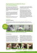 Negativabdichtungen für Mauerwerk und Beton - Köster Bauchemie ... - Seite 5