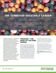 THE TENNESSEE VEGETABLE GARDEN