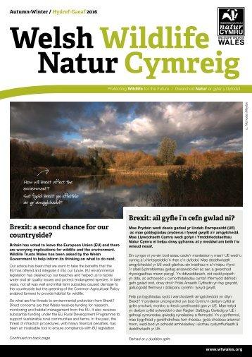 Welsh Wildlife Natur Cymreig