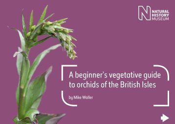 A beginner's vegetative guide to orchids of the British Isles