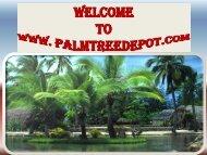 Sabal Palms for Sale in Carolina