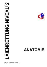 Anatomie Niveau 2 - SMSV