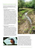 Mangrove restoration to plant or not to plant? - Page 5