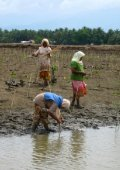 Mangrove restoration to plant or not to plant? - Page 6