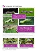 Rimón Fast Tu soja avanza Los insectos no - Page 5