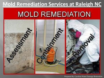 Mold Remediation Services at Raleigh NC - Carolina Water Damage Restoration