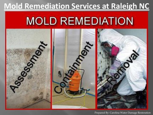 Mold Remediation Services at Raleigh NC - Carolina Water Damage Restoration
