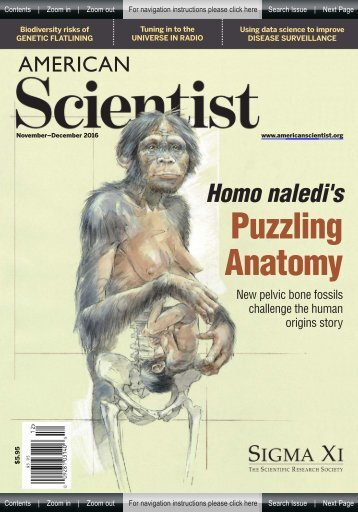 American Scientist - Puzzling Anatomy