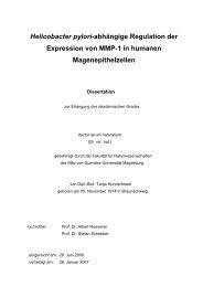 Helicobacter pylori-abhängige Regulation der Expression von MMP ...